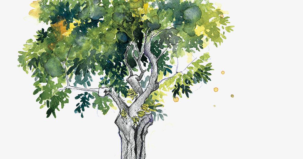 Exposição - Quando as árvores cantam..., de Paulo Alves
